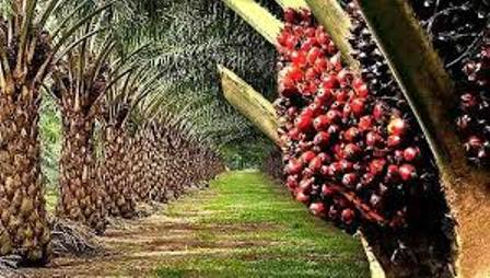 largest palm oil producing states in nigeria